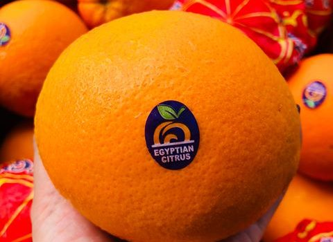 Valencia Orange time , now in Asian Market