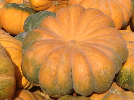 Egyptian Pumpkin , different taste with highest quality